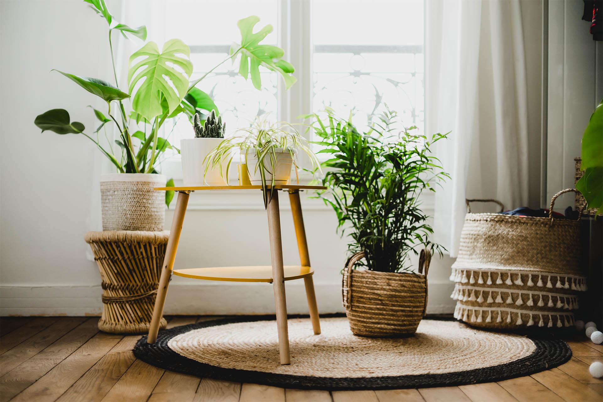 plantes chambre