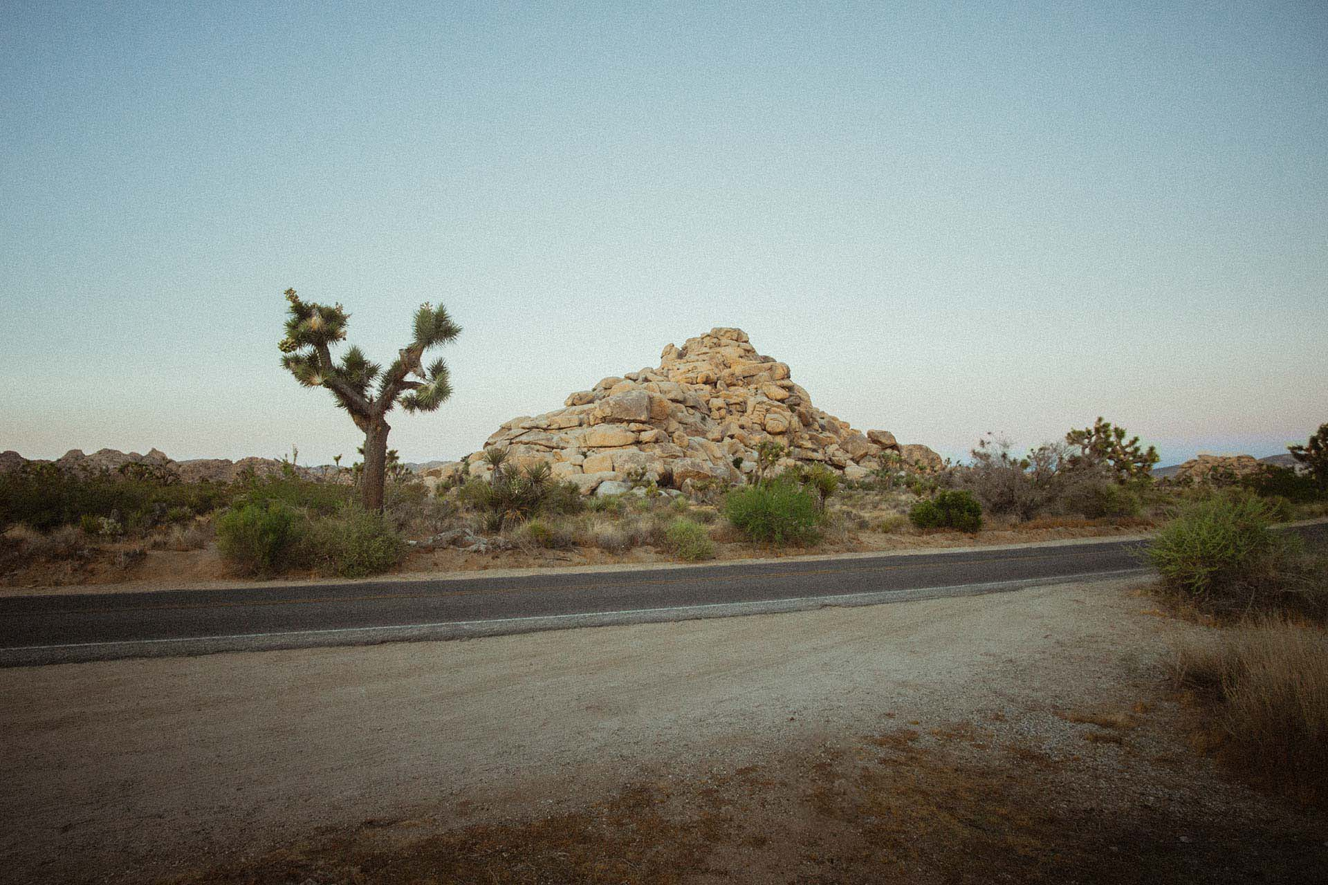 joshua-tree-road