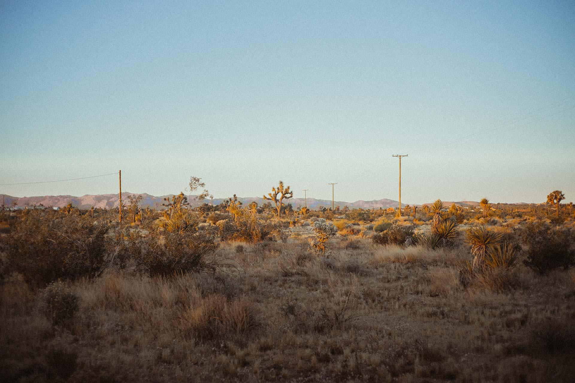 joshua-treet-yucca-valley