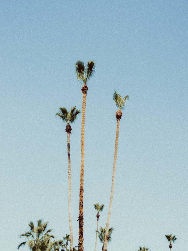 joshua-tree-palm-springs