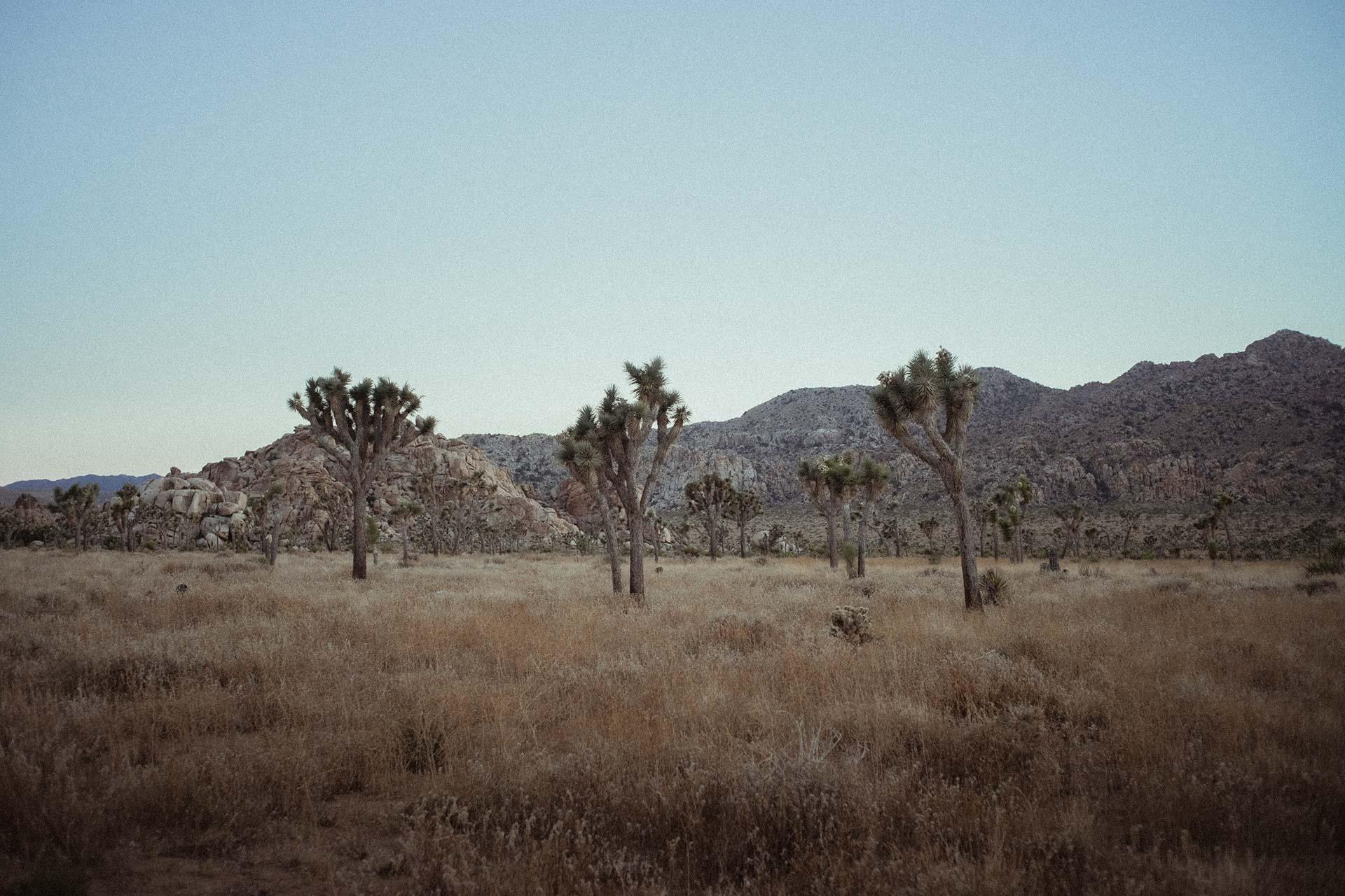 joshua-tree-hidden-valley